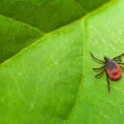 Lyme Disease Disability Claim